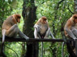 Bekantan Park wisata kalimantan selatan