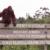 Keindahan 4 Taman Nasional Kalimantan Tengah